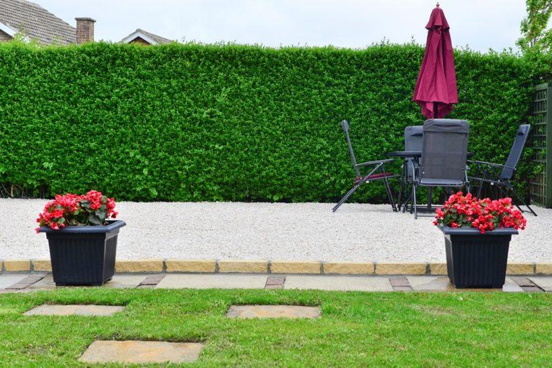 Ligusterhecke als Sichtschutz im Garten