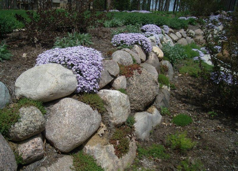 Trockenmauer aus Stein bauen und bepflanzen Pflox