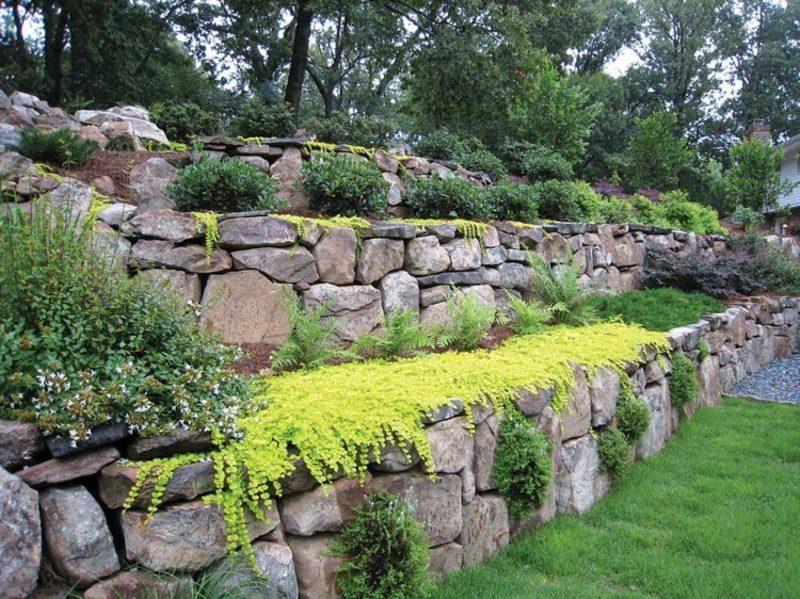 Trockenmauer bepflanzen Pfennigkraut winterhart