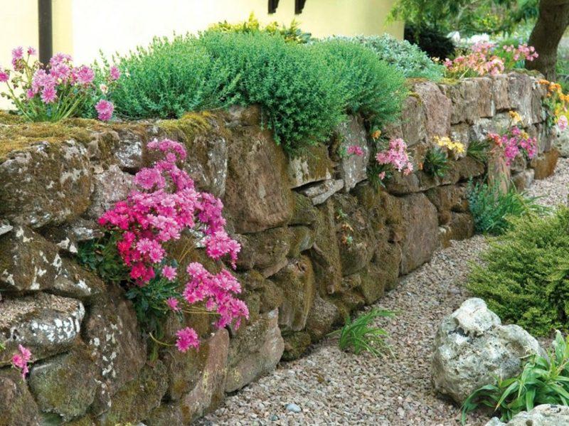 Trockenmauer aus Naturstein bepflanzen passende Blumenarten