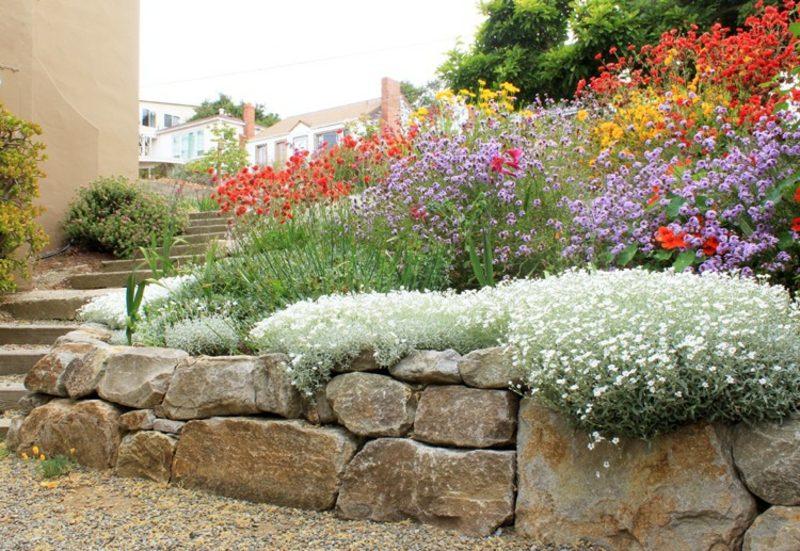 Trockenmauer Naturstein bepflanzen Hornkraut