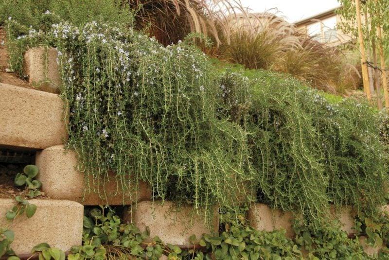 Trockenmauer Stein bepflanzen Tipps und Tricks