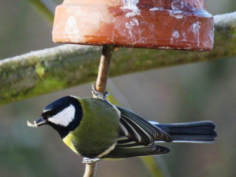 Vogelfutter selber machen Glocken