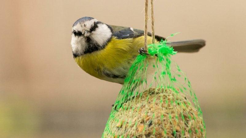 Vogelfutter selber machen tolle Ideen
