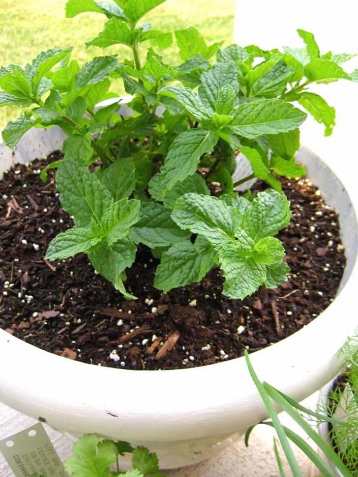 Was hilft gegen Mücken in der Wohnung - Pflanzen gegen Mücken