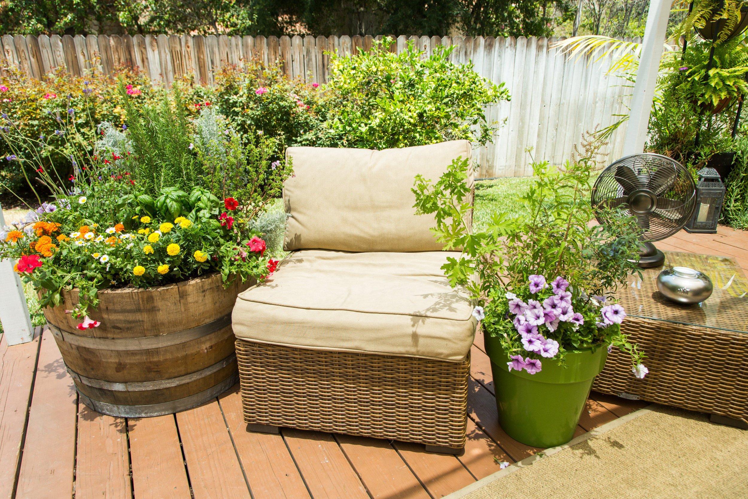 Pflanzen gegen Mücken für den Garten