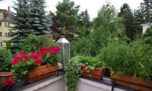 Balkongestaltung mit Pflanzen die besten Ideen