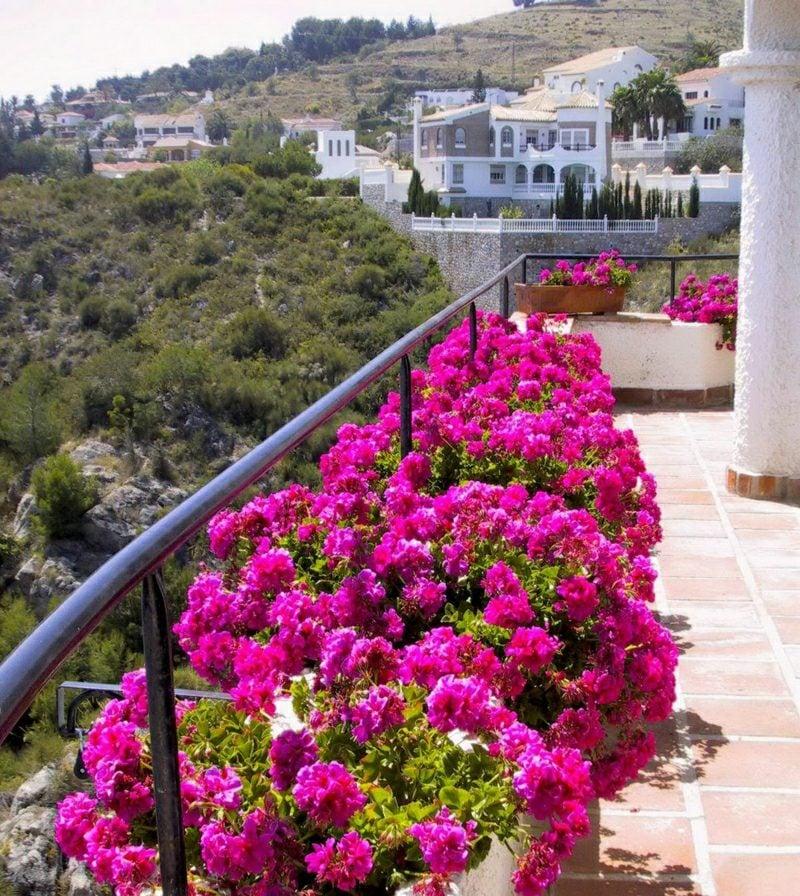 Balkongestaltung mit Pflanzen geeignete Pflanzenarten
