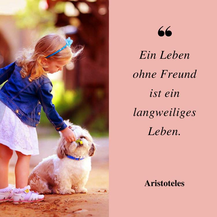 Sprüche Lebensweisheiten Freundschaft Zitat Aristoteles