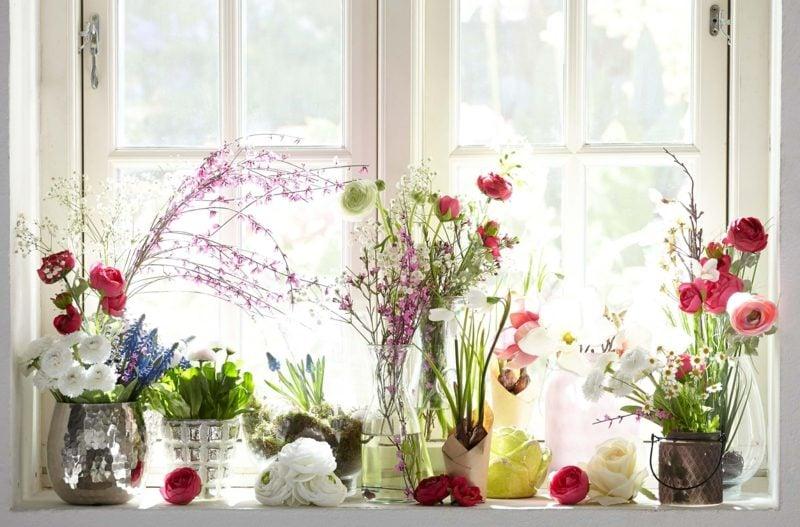 Fensterbank innen Blumen Pflegetipps
