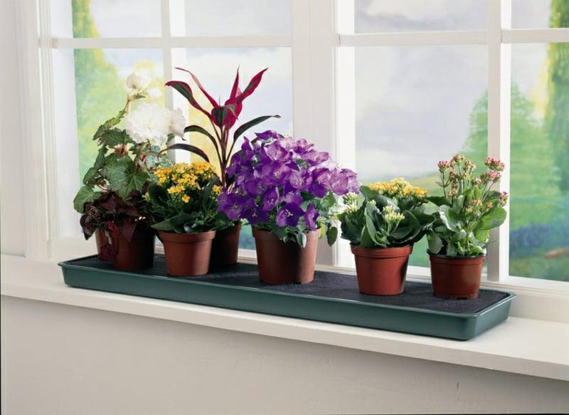 Fensterbank innen mit Blumen verschönern