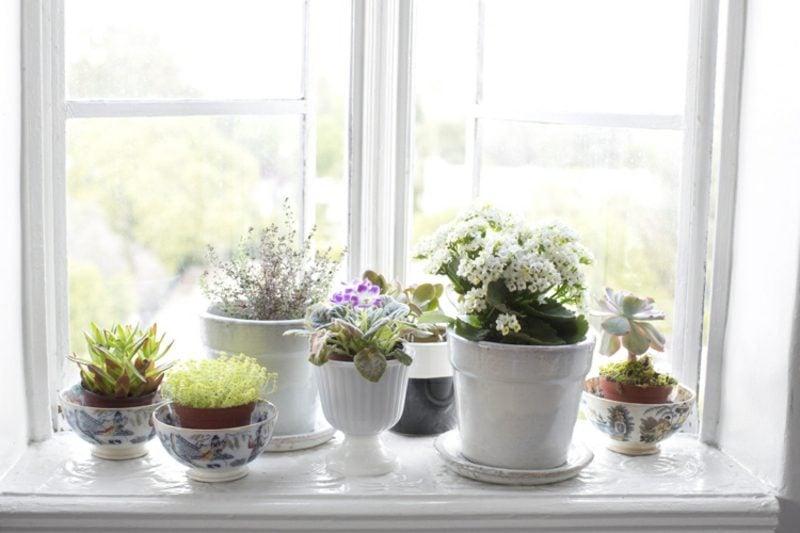 Fensterbank innen Blumen auswählen weisse Töpfe