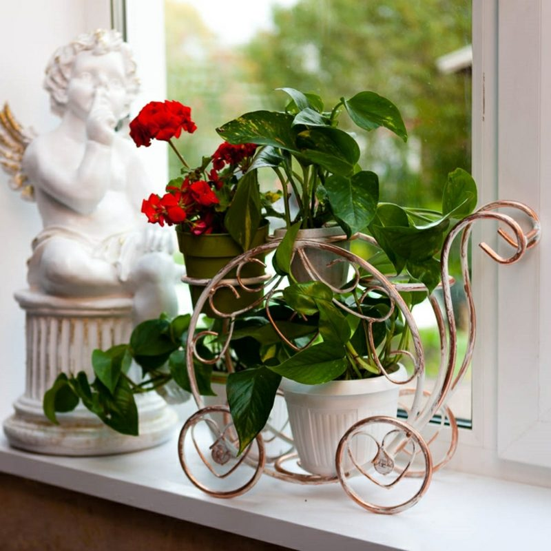 Fensterbank innen Blumen Geranien Efeutute