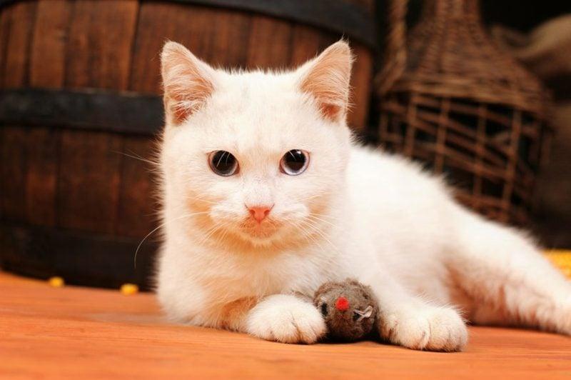Katzenspielzeug selber machen Beute