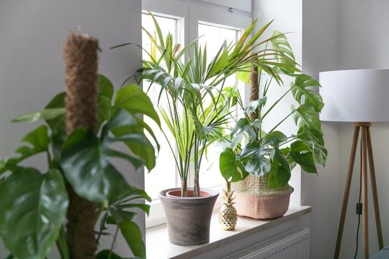 Fensterbank innen Blumenarten Palme