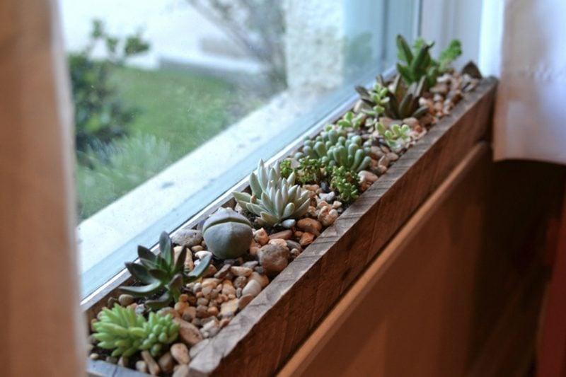 Fensterbank innen Sukkulenten Holzkiste