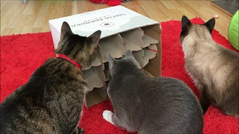 Katzenspielzeug selber machen Fummelkiste Weinkarton
