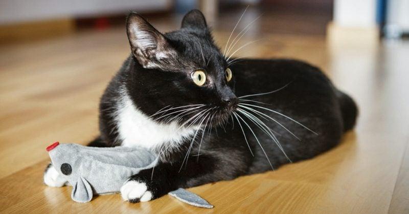 Katzenspielzeug selber machen Maus basteln
