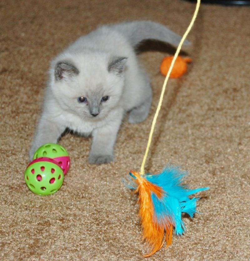 Katzenspielzeug selber machen Beute mit Federn
