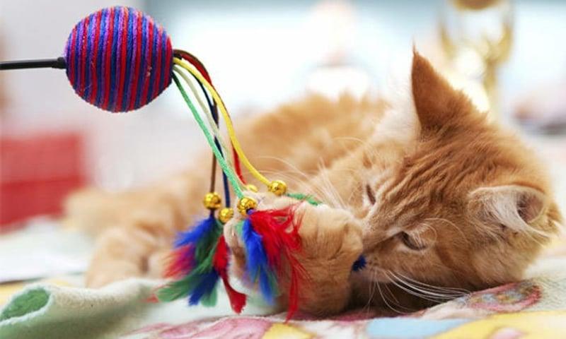 Katzenspielzeug selber machen einfache DIY Ideen