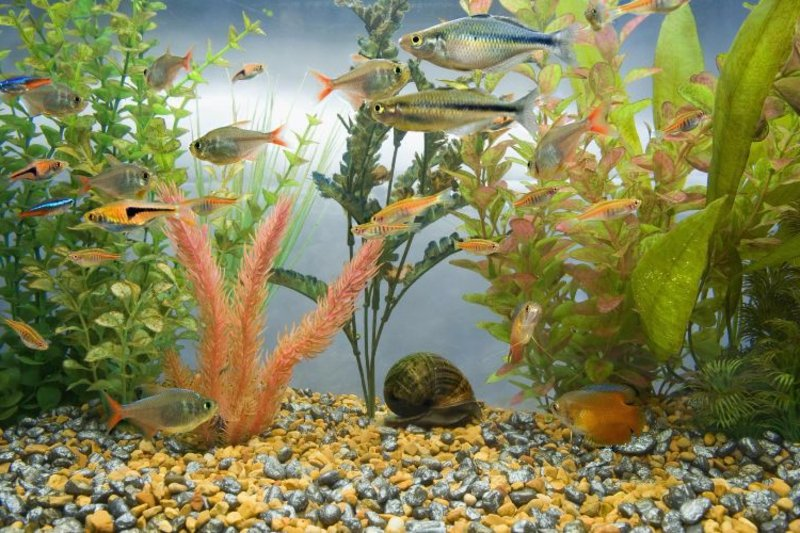 Aquarium Deko mit Wasserpflanzen und Kies