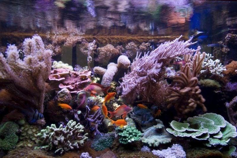Aquarium Deko Korallen herrlicher Look