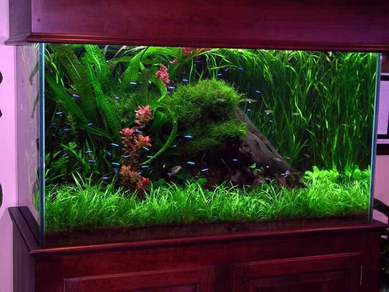 Aquarium Deko Neon Fische
