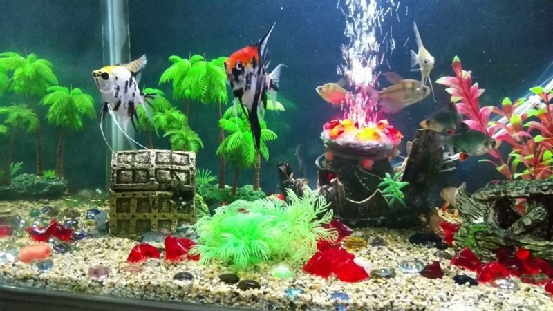 Aquarium Deko Schatz eindrucksvoll
