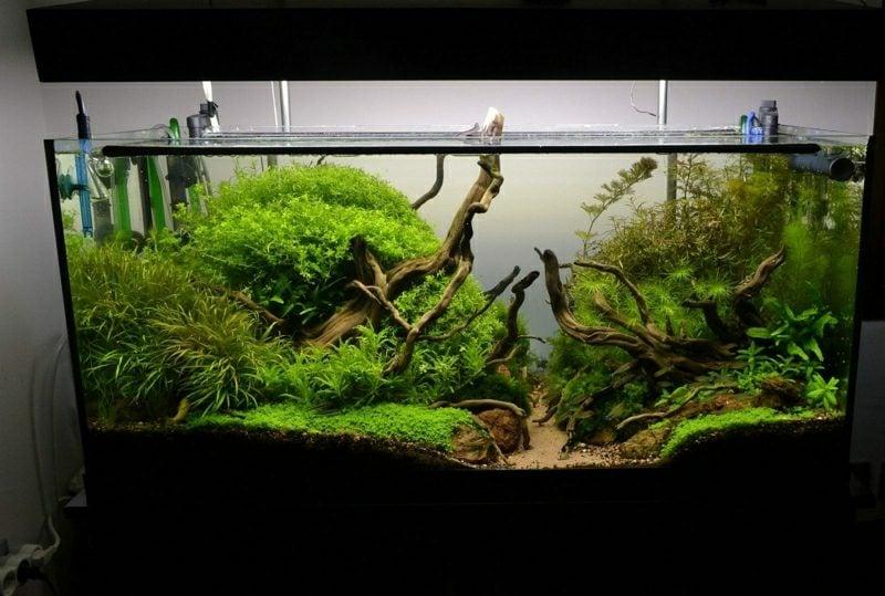 Aquarium Deko Urwald