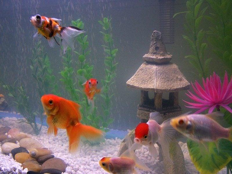 Aquarium Deko mit asiatischem Touch
