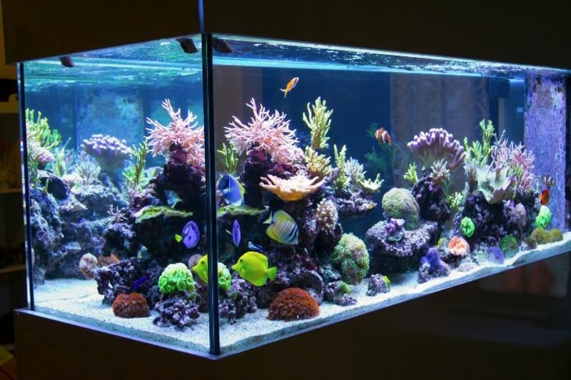 Aquarium Deko mit Korallen eindrucksvoll