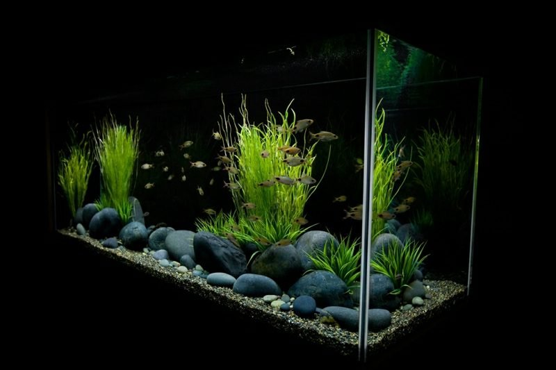 Aquarium Deko minimalistischer Stil