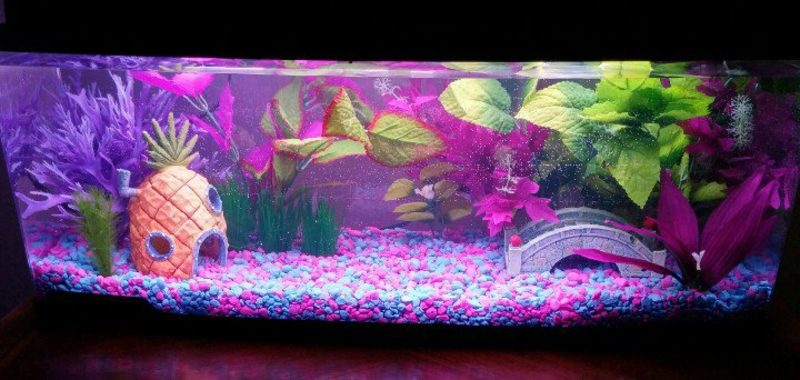 Aquarium Deko mit rosa Akzente herrlicher Look