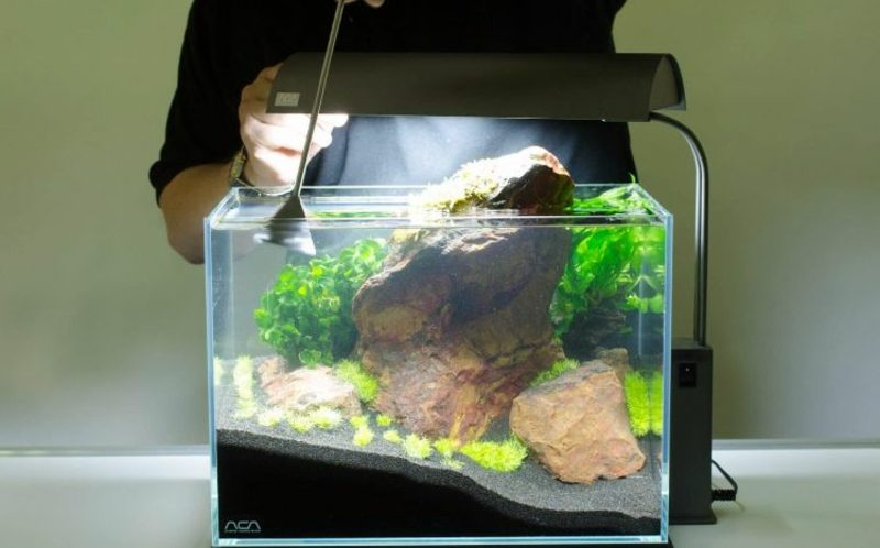 Aquarium Deko kleine Fische
