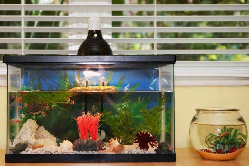 Aquarium Deko originell Goldfische