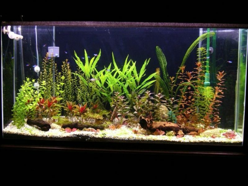 Aquarium Deko Wasserpflanzen auswählen