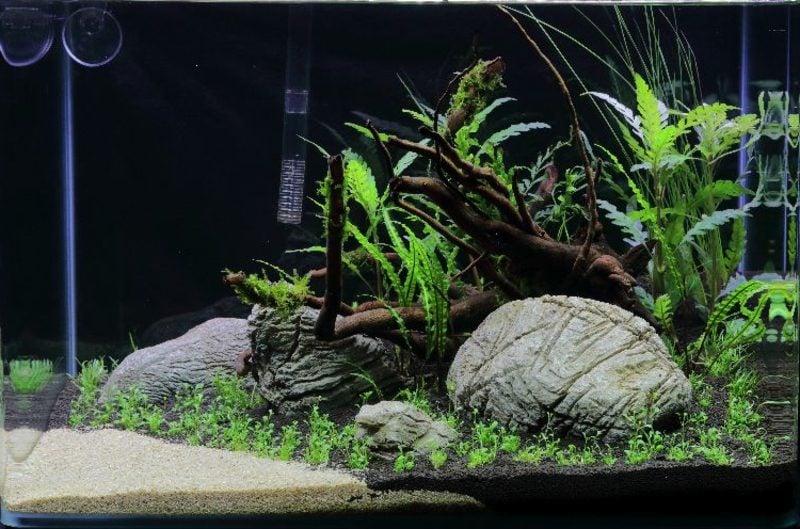 Aquarium Deko Pflanzen Stein Ast