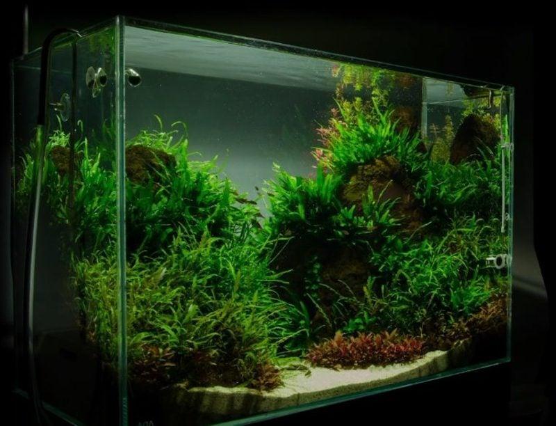 Aquarium Deko mit vielen Pflanzen