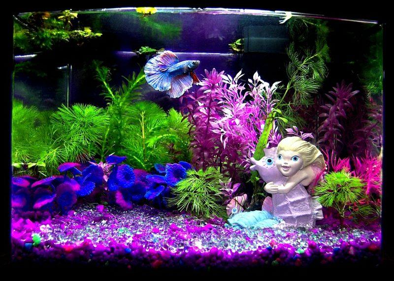 Aquarium Deko viele Pflanzen bunte Akzente