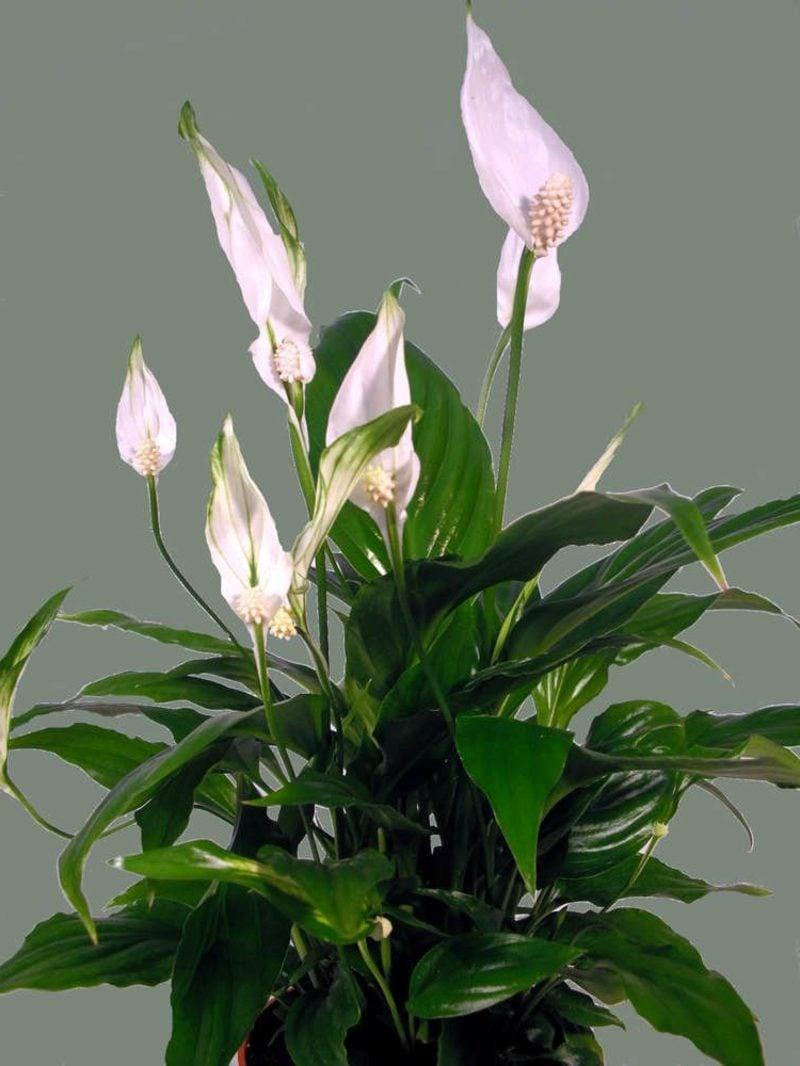 Pflanzen im Schlafzimmer Einblatt
