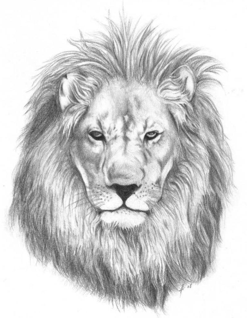 Tattoo Löwe Vorlage
