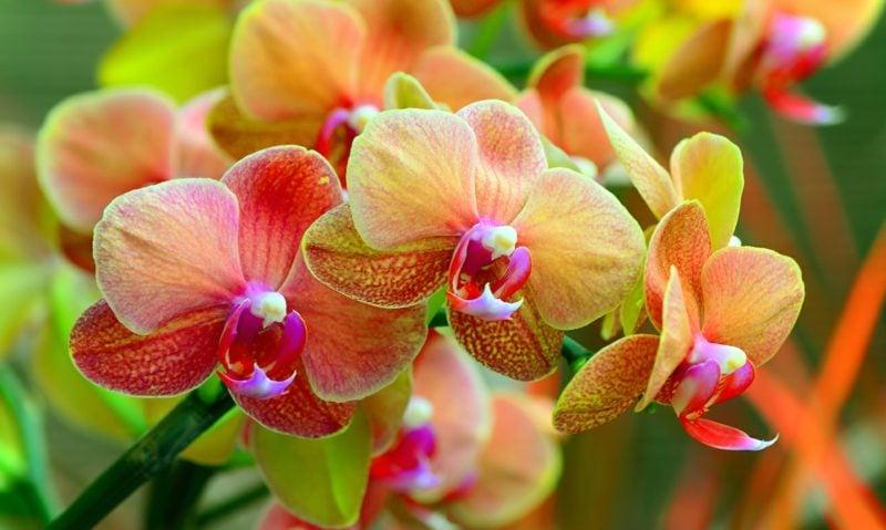 Pflanzen im Schlafzimmer ungeeignet Orchideen