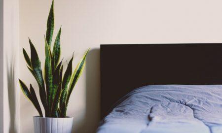 Pflanzen im Schlafzimmer welche Arten Ideen und Inspirationen