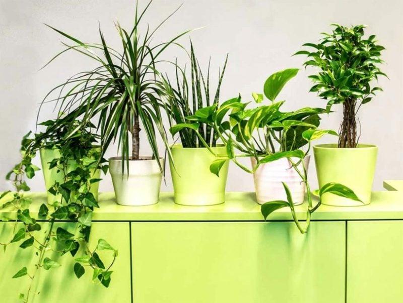 passende Arten Pflanzen im Schlafzimmer