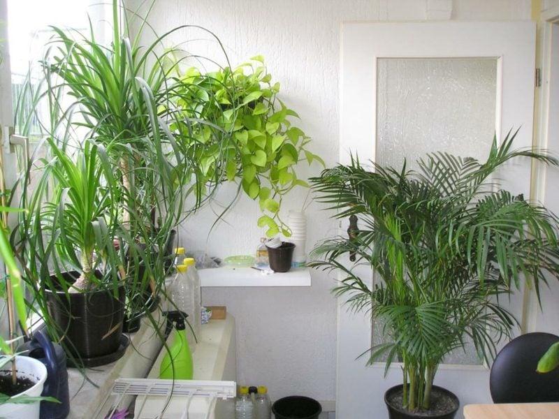 Pflanzen im Schlafzimmer auswählen Tipps