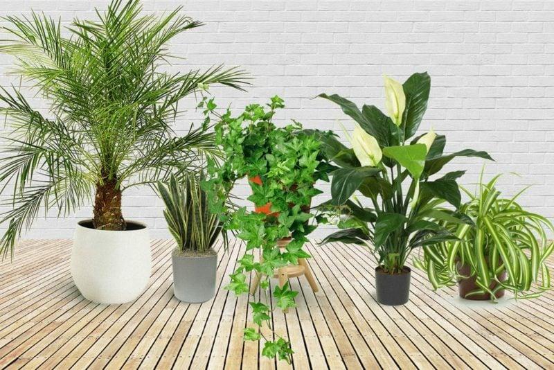 Pflanzen im Schlafzimmer passende Arten Tipps