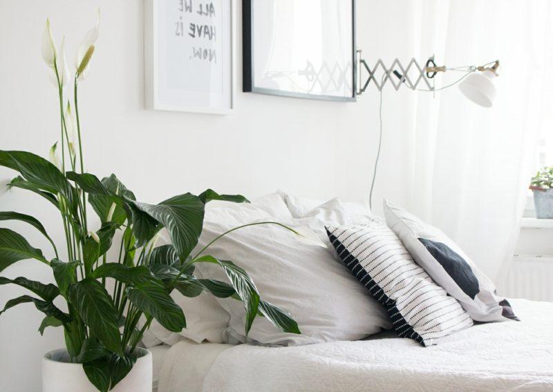 Pflanzen im Schlafzimmer passende Arten wählen