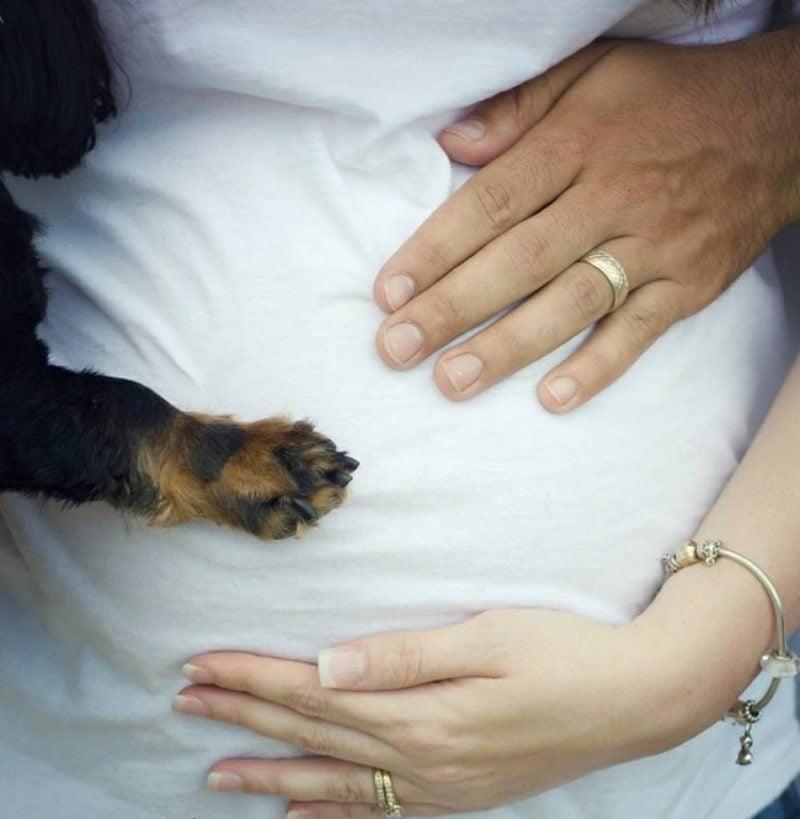 Schwangerschaftsfotos aufnehmen Hund Pfote