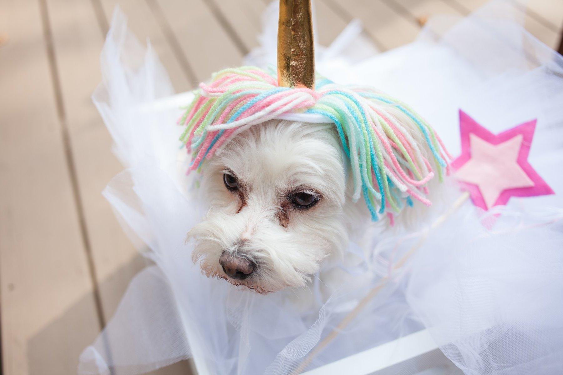 Einhorn Kostüm für Tiere selber machen