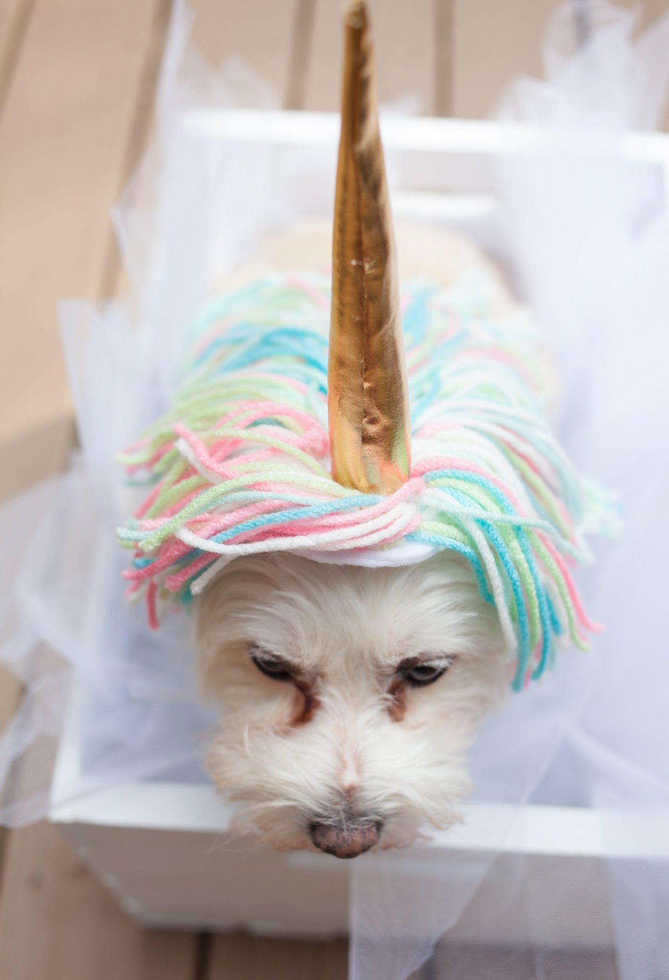 DIY Jumpsuit Tiere für Halloween